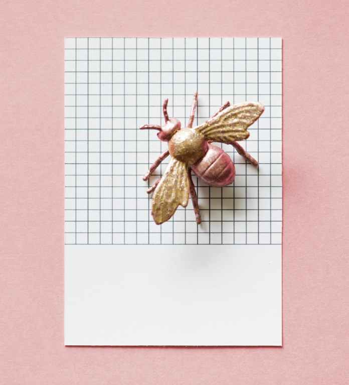 toy fly on white graphing paper