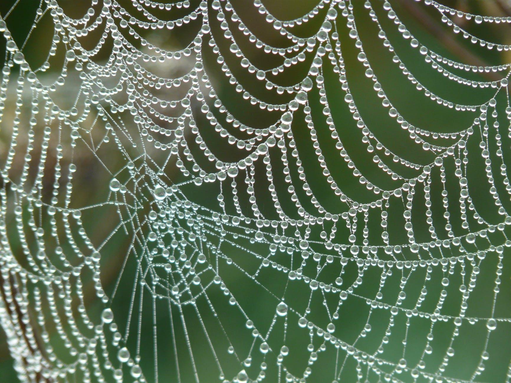 dew cobweb drip dewdrop